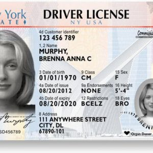 real and fake New York driver's licenses